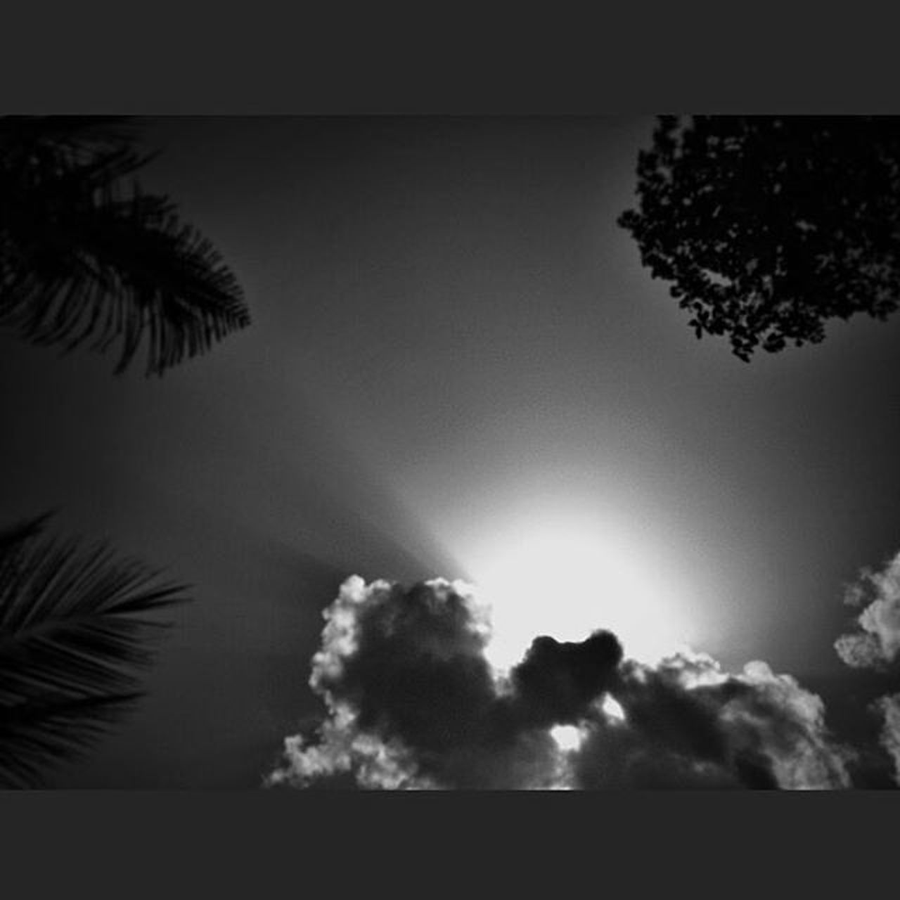silhouette, sky, no people, tree, day, nature, palm tree, outdoors, low angle view, beauty in nature, close-up
