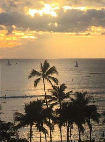 Ocean Sunset Beach Sky Water Horizon Over Water Palm Tree Sun Cloud - Sky No People Silhouette Oahu Hawaii Island Of Oahu, Hawaii Oahu, Hawaii Oahu Oahu Sunset Oahu / Hawaii An Eye For Travel The Great Outdoors - 2018 EyeEm Awards