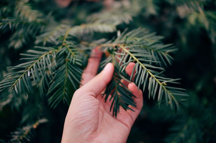 Pinetree Aesthetic Aesthetics Blurry Close-up Dark Green Leaves Day Hand Nature Nature Photography Nature_collection Pine Pine Tree Pinetree Positive Positivity Relaxing Relaxing Moments Veins