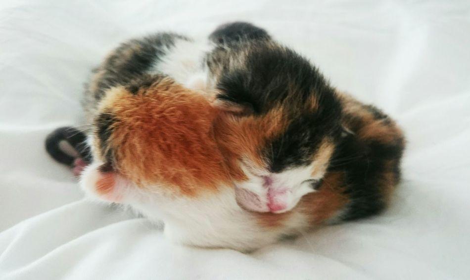 Hello World Born Newlife Presents Celebrating Life Joy Love Kitty Kittens Catphotography Catlovers Color Sleeping Beauties Beautiful Nature