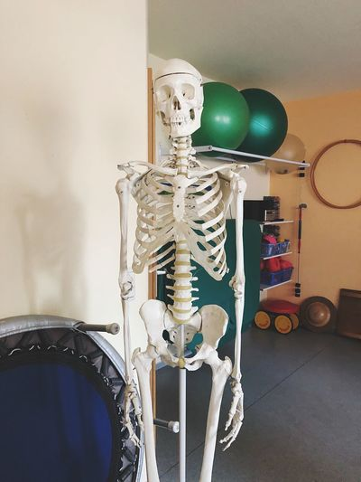 Healthy Health Doctor  Gymnastics Bones Physiotherapy Skeleton Skull EyeEm Selects Indoors  No People Still Life Wall - Building Feature Lighting Equipment Home Interior