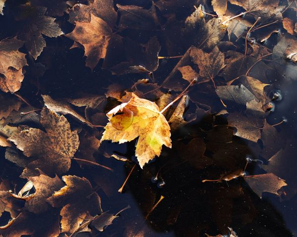 Seasonal changes Tones Colors Leaf Autumn Change Dry No People Nature Outdoors Close-up Fragility Beauty In Nature