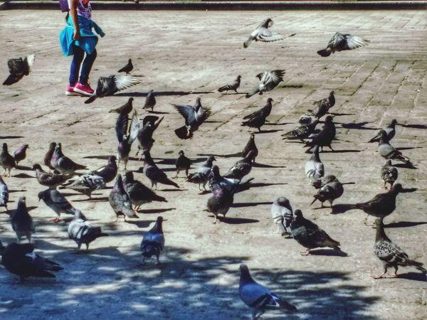Mexico Color Guadalajara Jalisco Palomas Vuelo De Aves