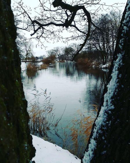 River River Natureshots Naturephotography красотавокругнас красотарядом красотаприроды краскиприроды природапрекрасна природалучшийхудожник Природа зима зимнийдень снег зимняясказка природарисует мороз лед зимушказима красотазимы Nature EyeEm Selects Water Tree Reflection Sky Close-up Water Surface