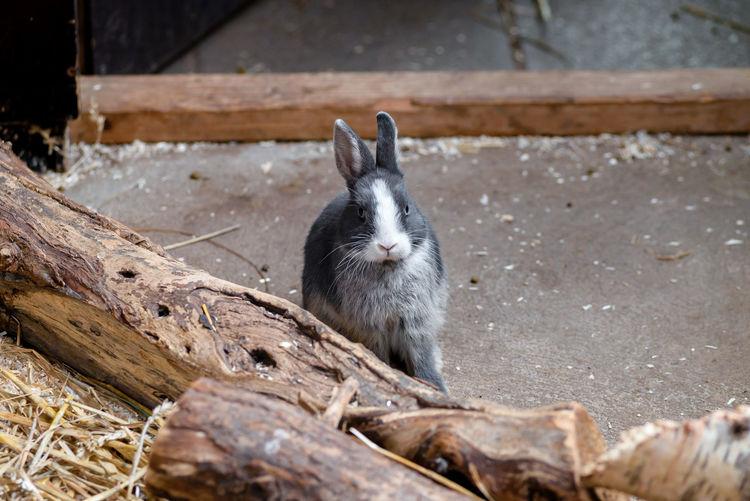 rabbit on wood