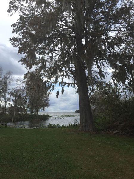 Water Lake lake Harris trees sky