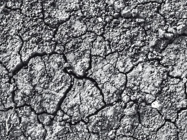 Full Frame Backgrounds Cracked No People Nature Textured  Day Outdoors Arid Climate Branch Tree Beauty In Nature Close-up mud