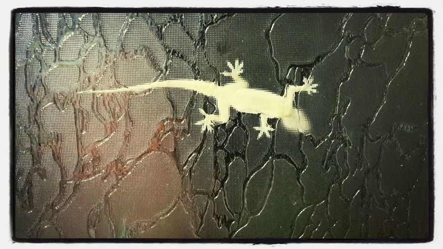 Lizard ..... ;)...... Shivi:)