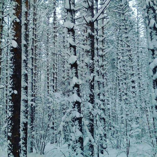 Зимний лес First Eyeem Photo
