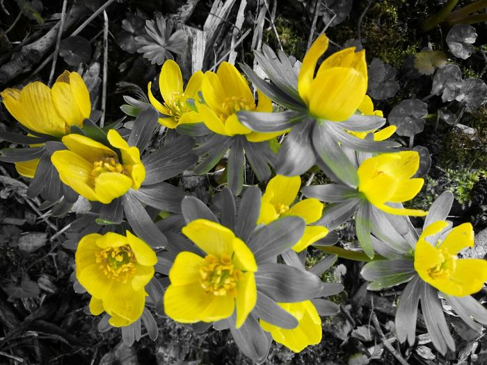Yellow Flower Close-up Nature Fragility Petal Flower Head Freshness Wet Growth No People Outdoors Beauty In Nature Day Crocus