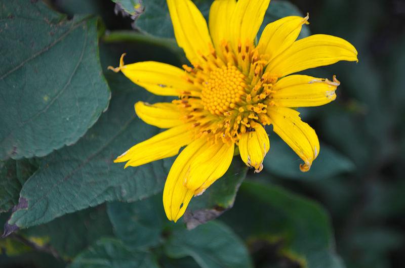Flower clothe
