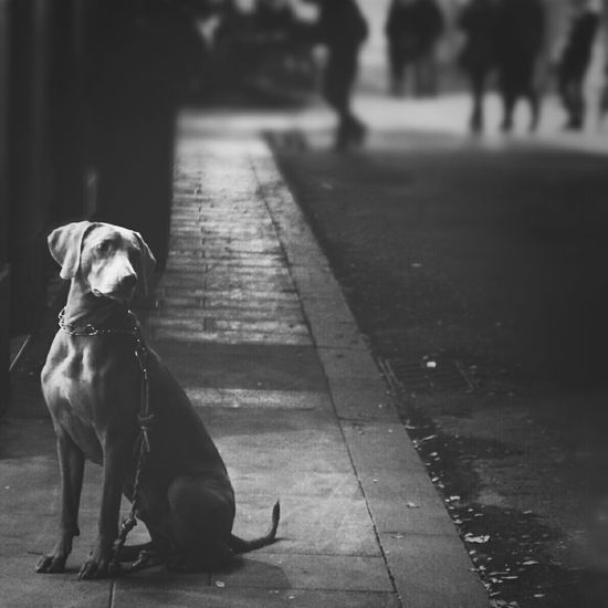 Street Night Streetphotography Blackandwhite Dog Taking Photos Pet Streetphoto_bw Bcn