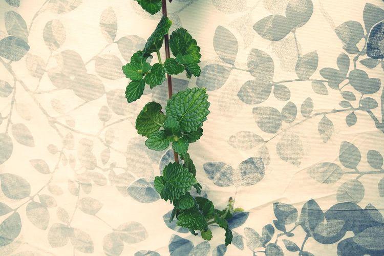 Green long leaf against flowery background