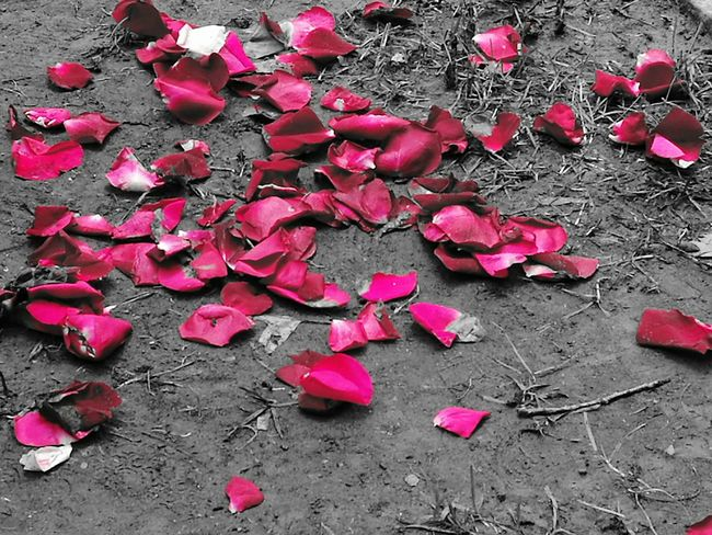 Red No People Heart Shape roses High Angle View Rose Petals Petals🌸 Roses red rose petals, wedding Outdoors petals rose petals on bare ground Tranquil Scene Beautiful