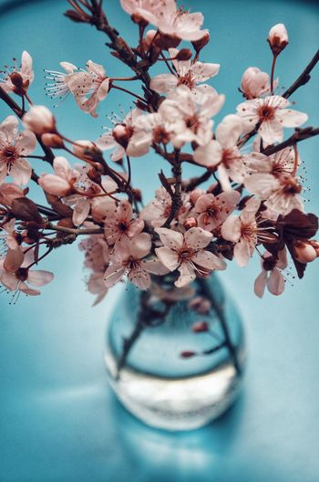 High angle view of cherry blossoms in vase on table