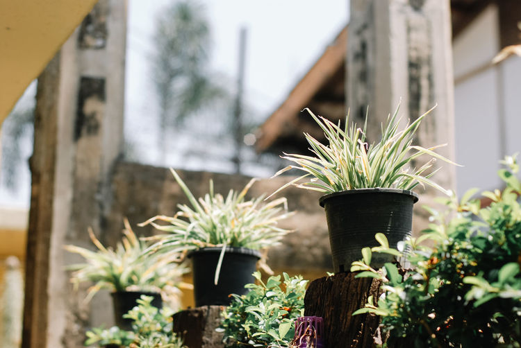 Plant Potted Plant Growth Nature No People Day Outdoors Focus On Foreground Architecture Beauty In Nature Built Structure Building Exterior Green Color Flower Flower Pot Fragility Leaf Vulnerability  Botany Flowering Plant Houseplant Gardening