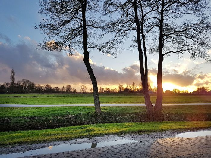 The Netherlands Flat Landscape Flatland Road Sunset Agriculture Field Nature Beauty In Nature Sky Sunset Rural Scene No People Tree