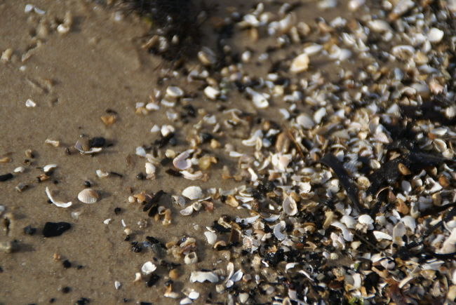 Abundance Backgrounds Beach Clam Clams Clamshell Close-up Day Full Frame Large Group Of Objects Minerals Nature No People Ocean Outdoors Pebble Rocks Sand Sea Sea And Sky Sea Shore Sea Trash Shell Shore Spring Welcome To Black The Secret Spaces The Great Outdoors - 2017 EyeEm Awards