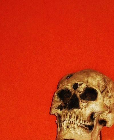 Skull Human Skull Human Body Part Human Skeleton Human Bone Spooky Bone  Horror Red Indoors  Close-up Halloween Museum Oaxaca México  Ancestors Deadhead Old Artifact