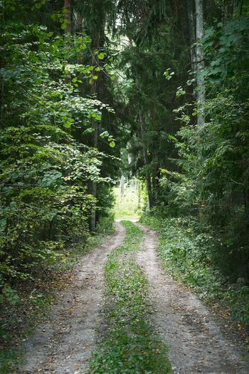 Dirt road along plants and trees in forest
