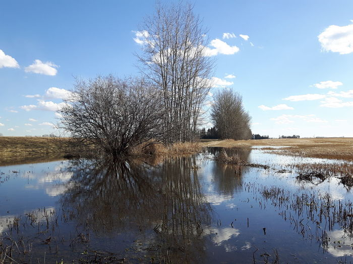Water Reflection Nature Tree Sky Non-urban Scene No People Scenics Outdoors Beauty In Nature Day Spruce Grove, Alberta Samsung Galaxy S5 Neo Nature Cloud - Sky Landscape Blue Pond Double View