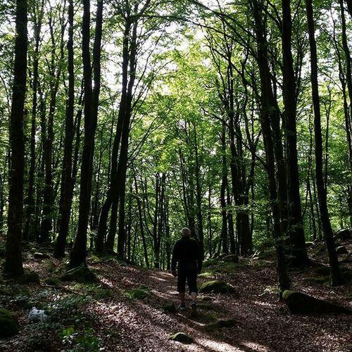 åkullabokskogar Dagsås Promenad med Pappa. Vadåfilter ?