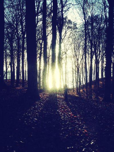 ChimneySweep JegHarVejlesSmukkesteUdsigt Soaking Up The Sun November2014 Hugging A Tree Denmark