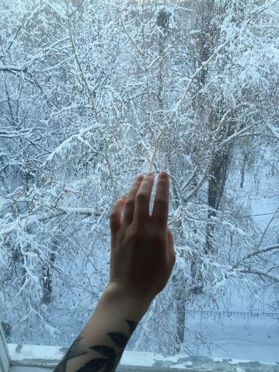 Cropped image of person hand on plant during winter
