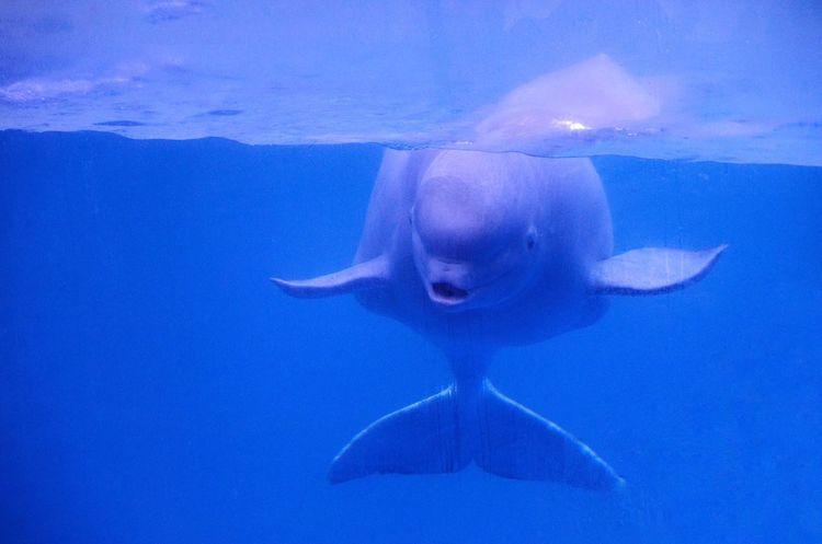 White Whale Animal Cute