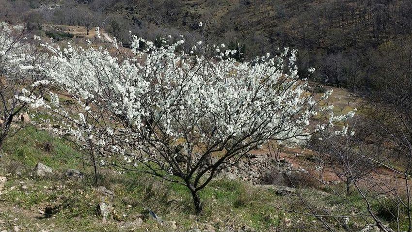 Primavera en el Valle del Jerte. Relaxing Enjoying Life Nature