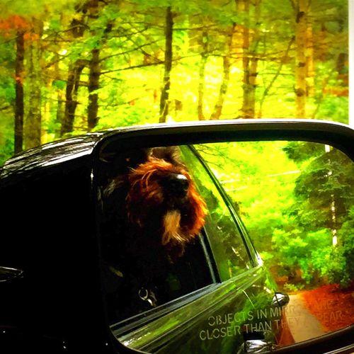 Happy Dog Happy Doggy Dog Loving The Breeze Dog With Head Out Car Window Black Dog I Love My Dog Doggy Puppy Love Dog Loves Car Rides SNOOP DOGGY DOGG Snoopdogg Snoop Dog