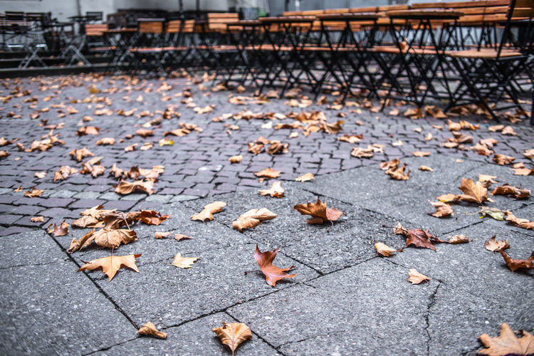 Fallen leaves on footpath in park