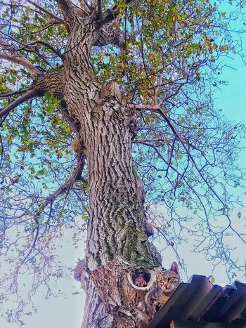 Tree Sky Low Angle View No People Day Outdoors Close-up Backgrounds Nature Water Cat