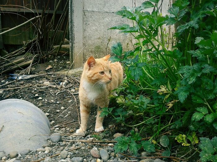 Curious cat One Animal Cat Domestic Cat Feline Pets Animal Themes Spring Time Outdoors Domestic Animals Furryfriend Gatos Kitten