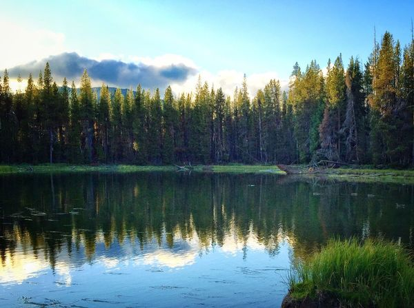 Teal Lake Water Tree Tranquil Scene Lake Tranquility Scenics Reflection Beauty In Nature Forest Nature Non-urban Scene Idyllic Majestic Growth Sky Calm WoodLand Cloud - Sky Day Outdoors