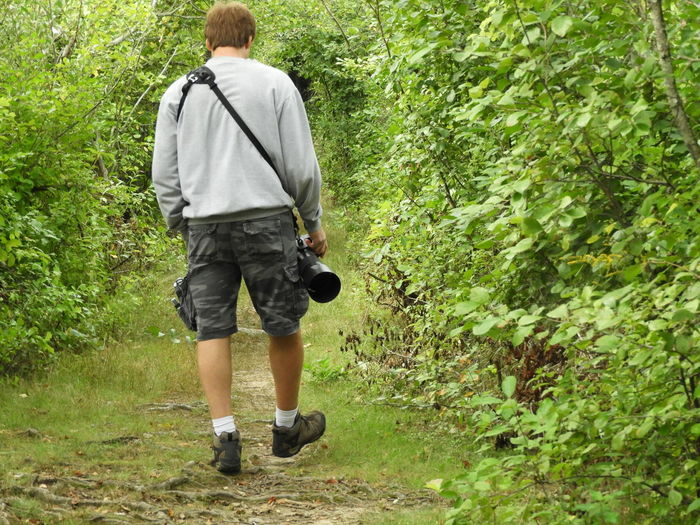 Rear View Of Man Walking In Forest