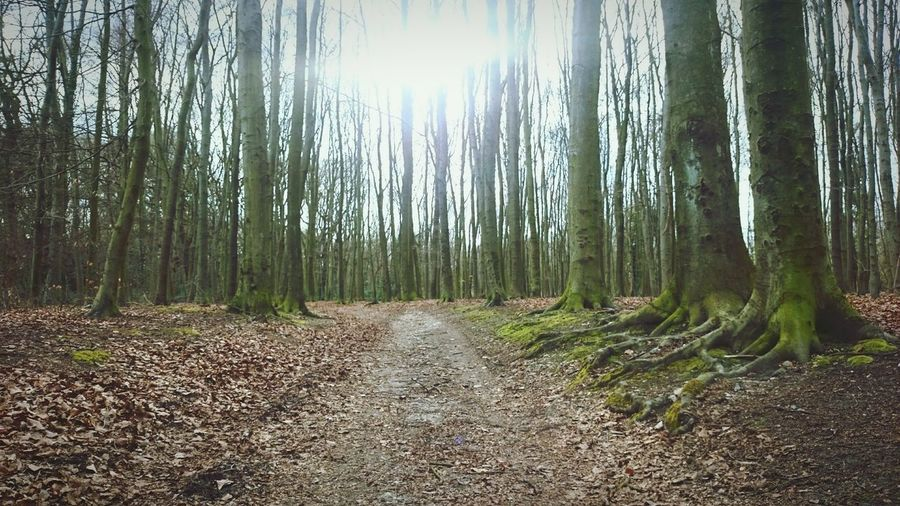 March '16 Back Again In The Wood All These Trees Nature