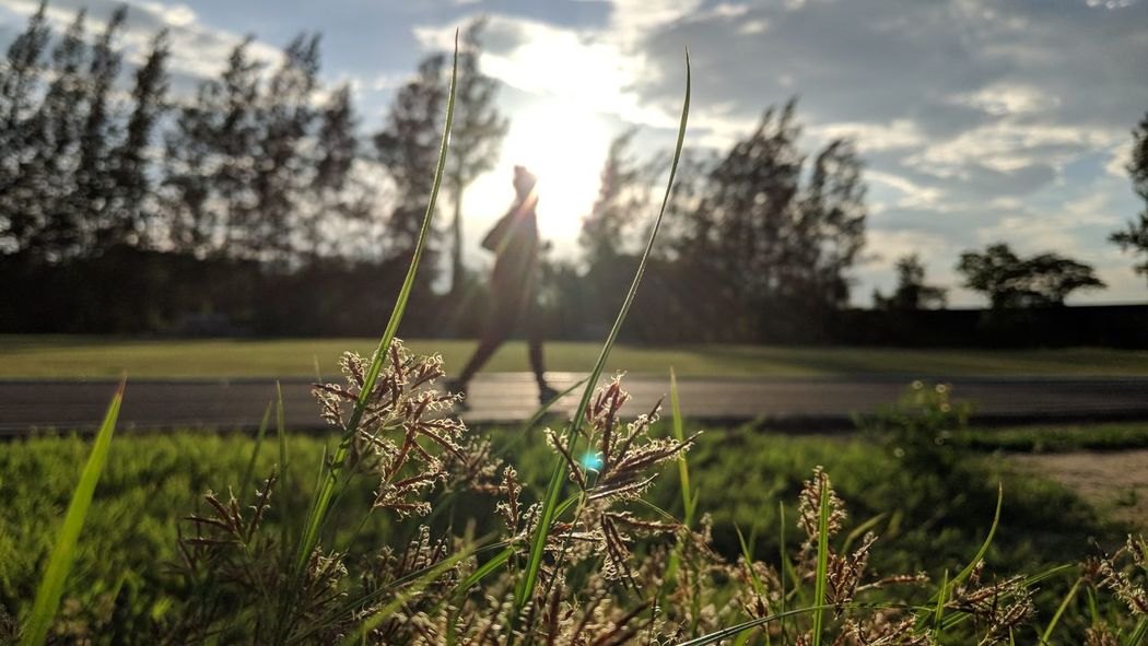 Tree Water Sunlight Sky Grass