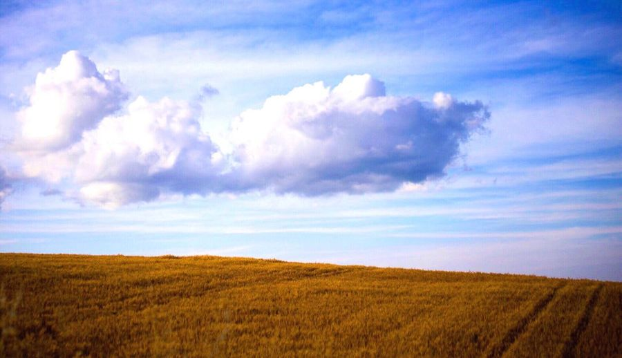 EyeEm Selects EyeEm Selects Field Agriculture Landscape Nature Farm Sky Tranquility Crop  Rural Scene Growth Beauty In Nature Scenics Tranquil Scene No People Cloud - Sky Day Outdoors Cereal Plant