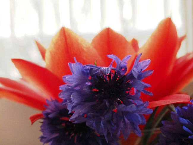 Flower Bunch Red And Blue Windowsill