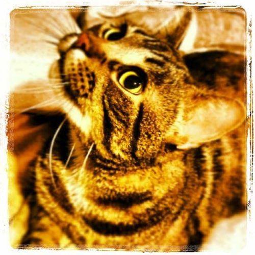 Cat Paintshop Pro Close-up