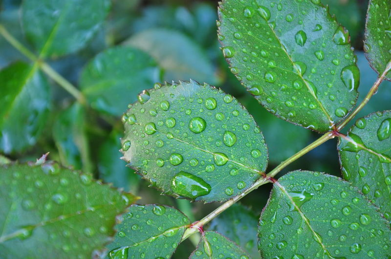 Beauty In Nature Close-up Day Drop Fragility Freshness Green Color Growth Happy Happy Time Leaf Nature No People Outdoors Plant Rain RainDrop RainDrop Rainy Days Summerrain Water Wet