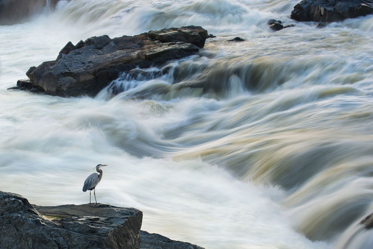 View of seagull on rock