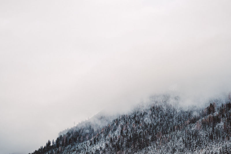 Beauty In Nature Cold Temperature Copy Space Day Fog Foggy Forest Landscape Mountain Mountain Range Nature No People Outdoors Pine Tree Scenics Sky Snow Snowcapped Mountain Snowing Spruce Tree Tree Weather Wilderness Area Winter WoodLand