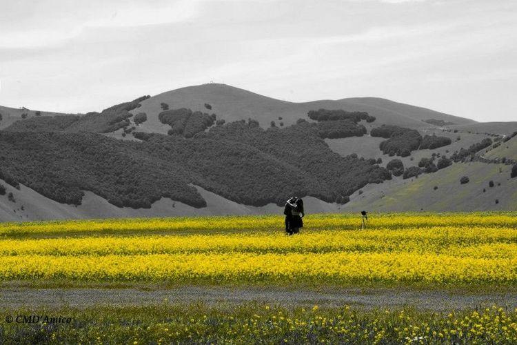 La fioritura di Castelluccio di Norcia Black & White Color Splash Flowers Black And White With A Splash Of Colour Splash Norcia Love Hug Silhouette
