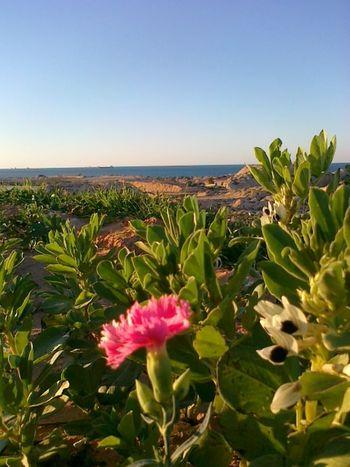 Garden Photography Flowers Sea in Azzawya, Libya