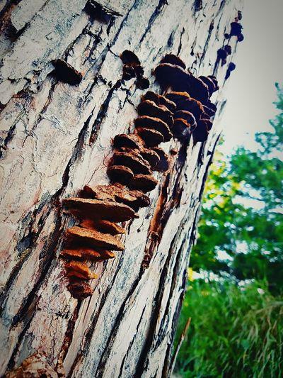 Fungus Amung Us!