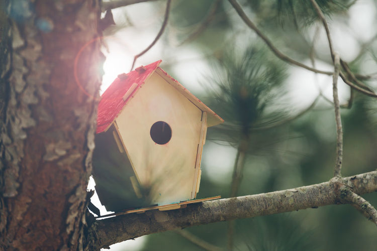 Birdhouse on tree during sunny day