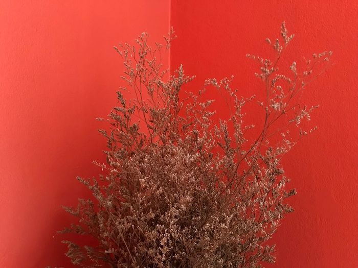 Dry flowers Red Change No People Tree Growth Autumn Beauty In Nature