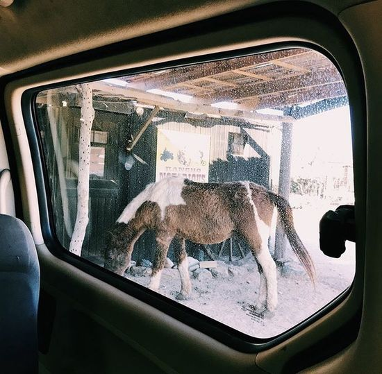 Reflection of horse in glass window